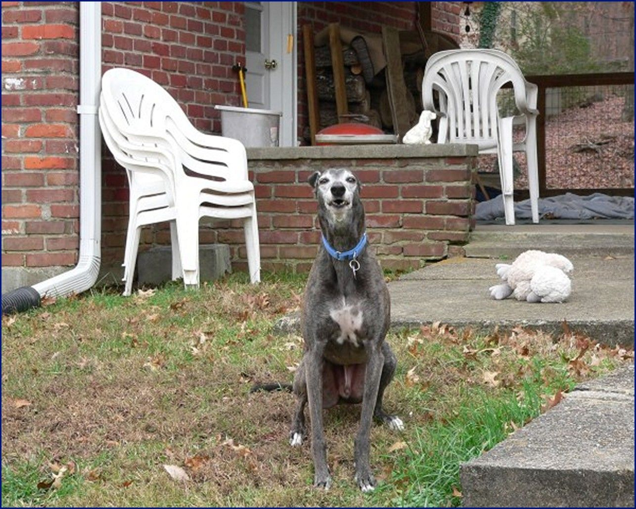 Greyhound-Adoption-Fuzzy3.jpg